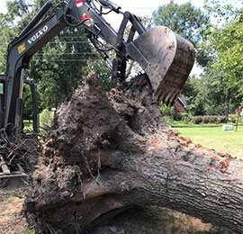 tree cleared from land
